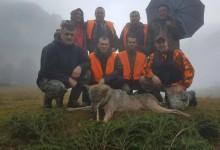 """Lovci """"Maluše"""" još jednom pritekli u pomoć mještanima- odstrijeljen i četvrti vuk u osam dana"""