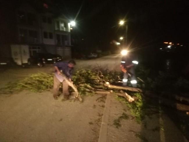 Vjetar polomio stablo u Ulici Meše Selimovića